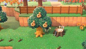 あつ 森 お金 の 木
